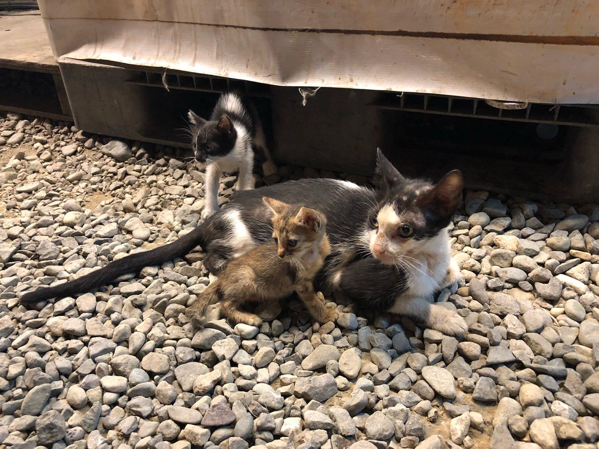セブ島の野良犬&野良猫について